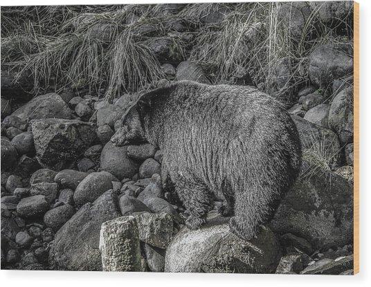 Watching Black Bear Wood Print