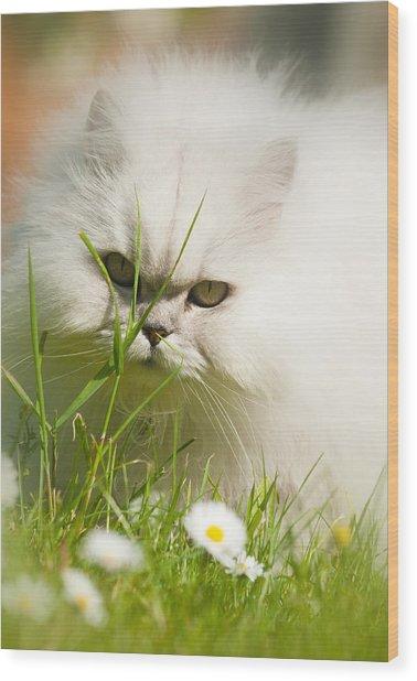 Watching Daisies Wood Print