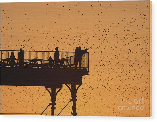 Watching The Sunset And Starlings In Aberystwyth Wales Wood Print