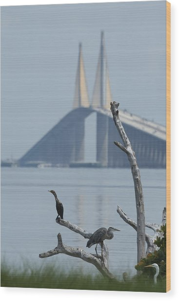 Water Birds On Tampa Bay Wood Print by Carl Purcell