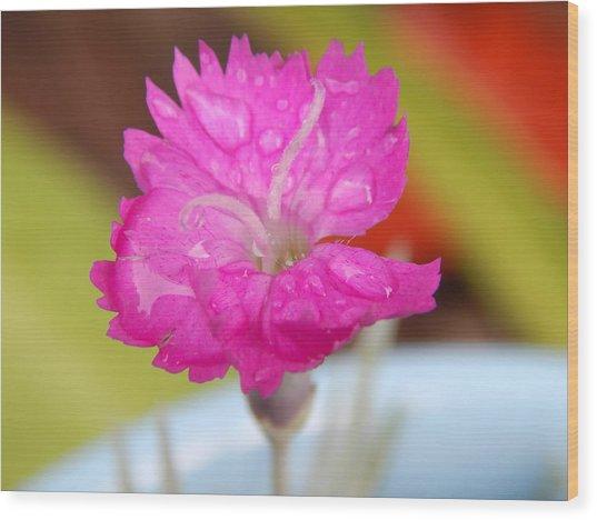 Water Bug Flower Wood Print