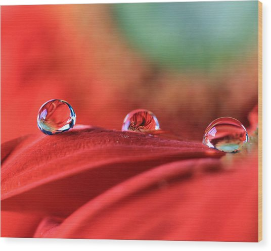 Water Drop Reflections Wood Print
