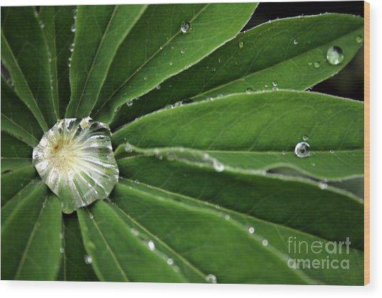 Water Drop Wood Print by Marta Grabska-Press