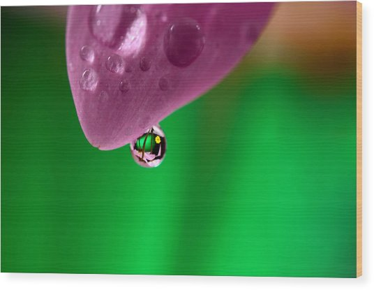 Water Drop Reflections With Purple Wood Print