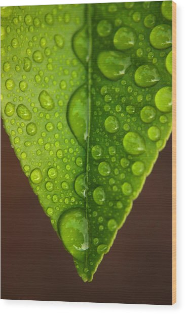 Water Droplets On Lemon Leaf Wood Print