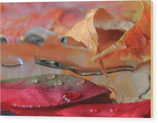 Water Drops On Autumn Leaves Wood Print