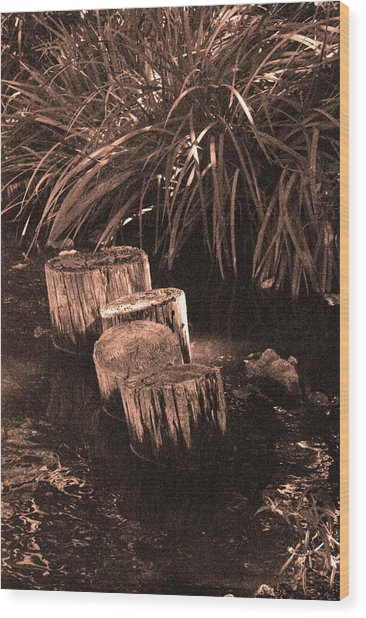 Water Garden Wood Print by Audrey Venute