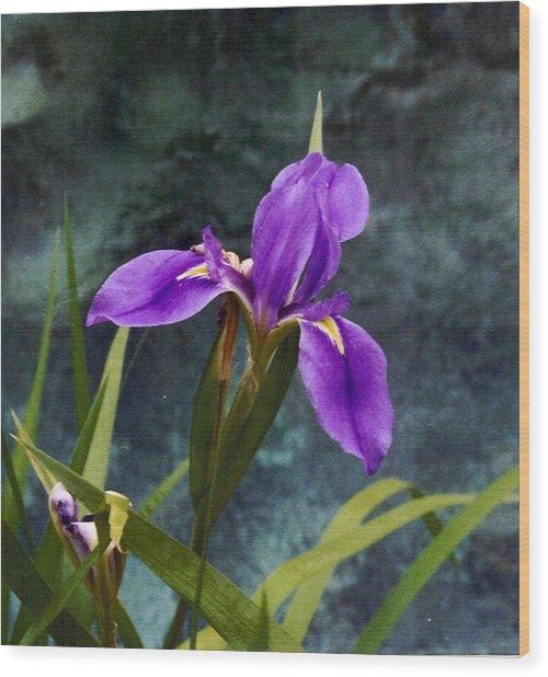 Water Iris Wood Print by Rebecca Shupp
