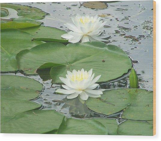 Water Lilies At Conesus Lake Wood Print