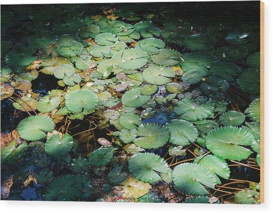 Water Lillies Wood Print