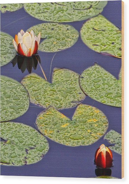Water Lillies At Clear Lake Wood Print