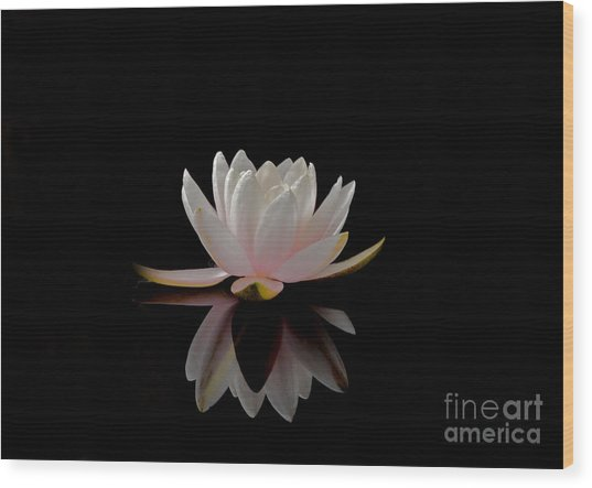 Water Lily Wood Print by Elizabeth McPhee