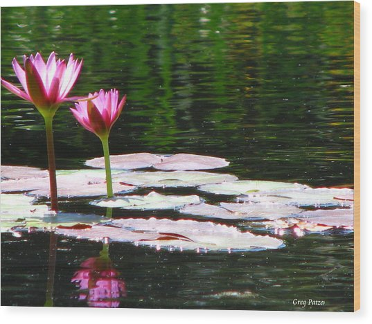 Water Lily Wood Print by Greg Patzer