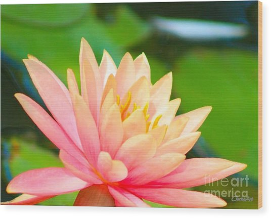 Water Lily In Pond Wood Print