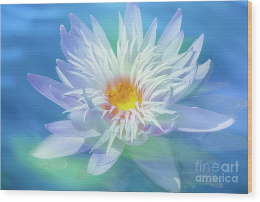 Water Lily In  Turquoise Pond Wood Print