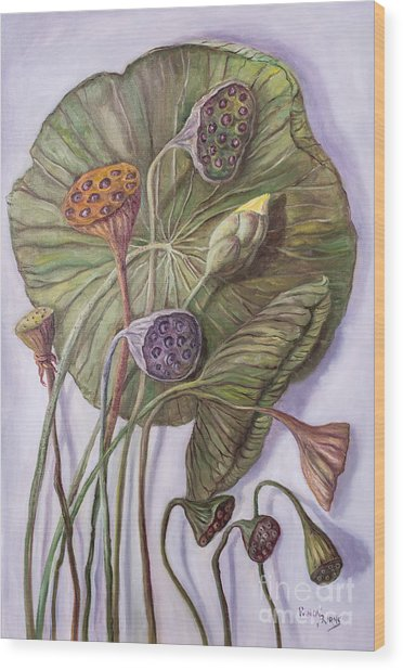 Water Lily Seed Pods Framed By A Leaf Wood Print