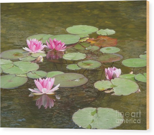 Water Lily Wood Print by Tierong Fu