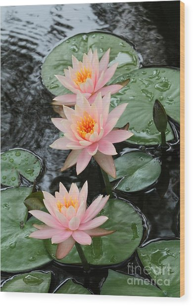 Water Lily Trio Wood Print