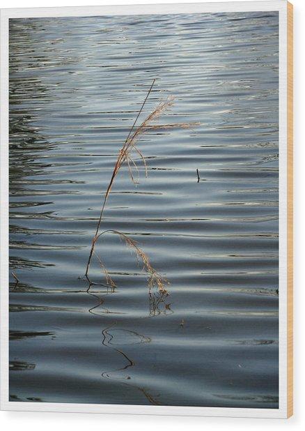 Water Reed Wood Print by Dawn Davis