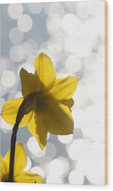 Water Reflected Daffodil Wood Print by Karla DeCamp