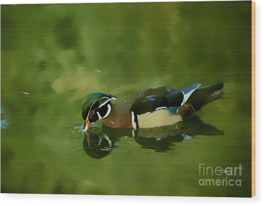 Male Wood Duck Water Reflections Wood Print