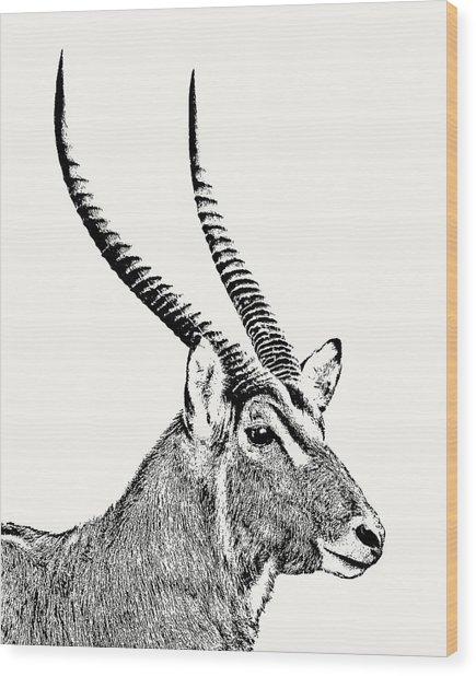 Waterbuck Male Portrait Wood Print