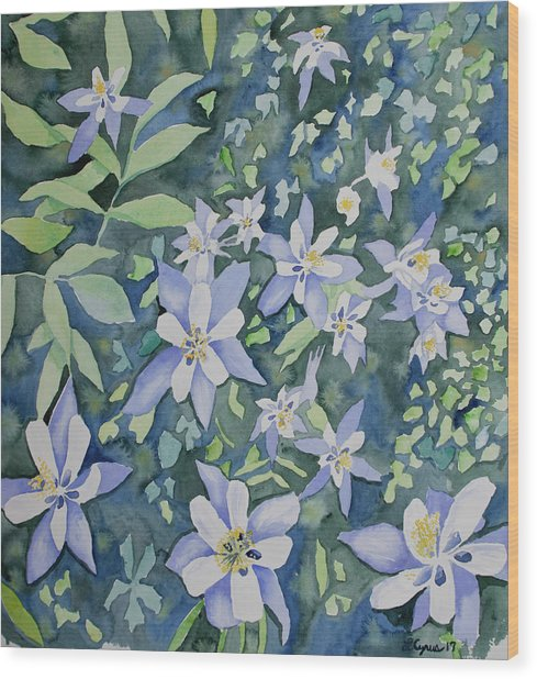 Watercolor - Blue Columbine Wildflowers Wood Print