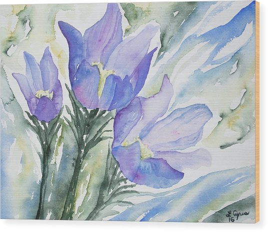 Watercolor - Pasque Flowers Wood Print