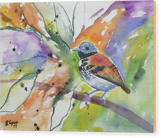 Watercolor - Spotted Antbird Wood Print