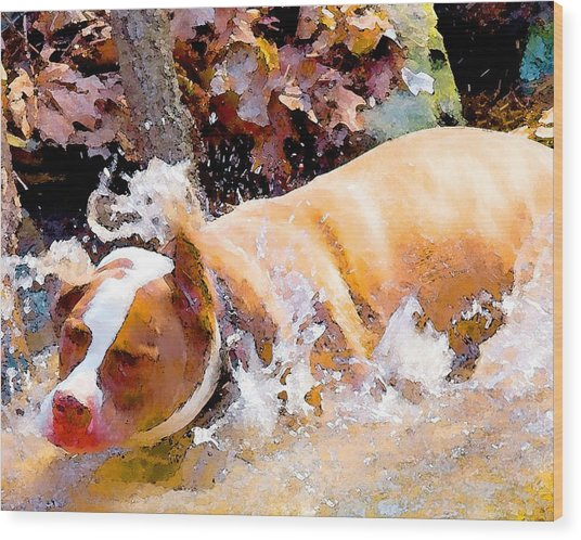 Waterdog Wood Print by John Toxey