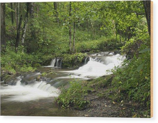 Waterfall Oasis Wood Print by Tina B Hamilton