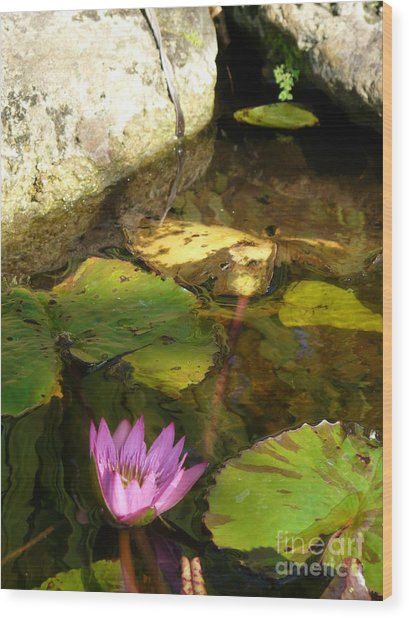 Waterlilies 2 Wood Print by Donna McLarty