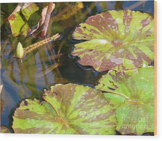 Waterlilies Wood Print by Donna McLarty