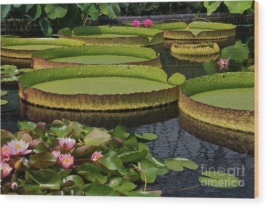 Waterlilies North And South Wood Print