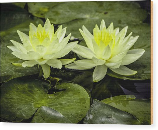 Waterlily Duet Wood Print