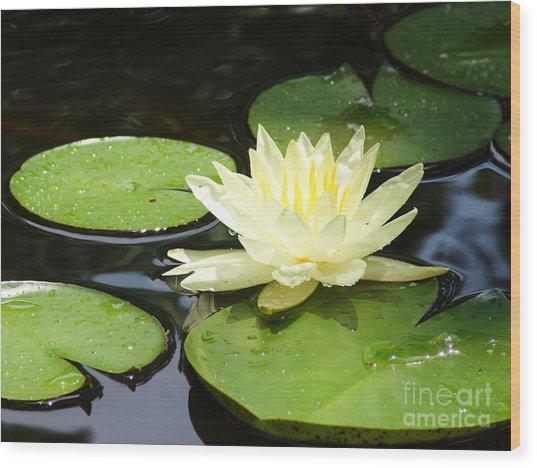 Waterlily In Yellow Wood Print by Tonya Laker