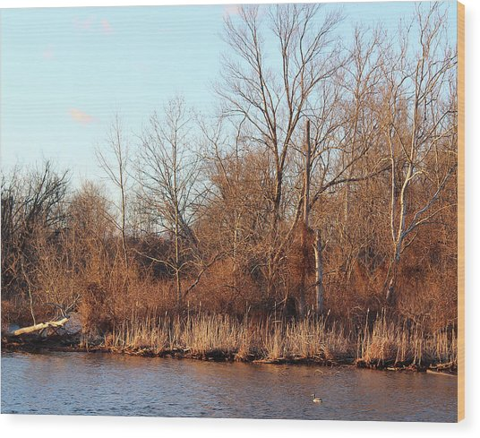 Northeast River Banks Wood Print