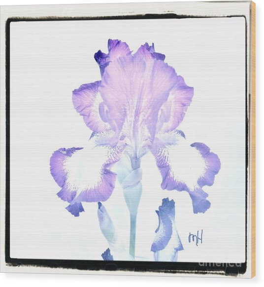 Wavy Purple And White Iris Wood Print