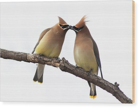 Waxwings In Love Wood Print