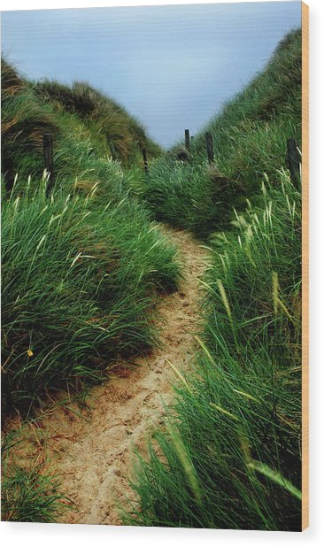 Way Through The Dunes Wood Print