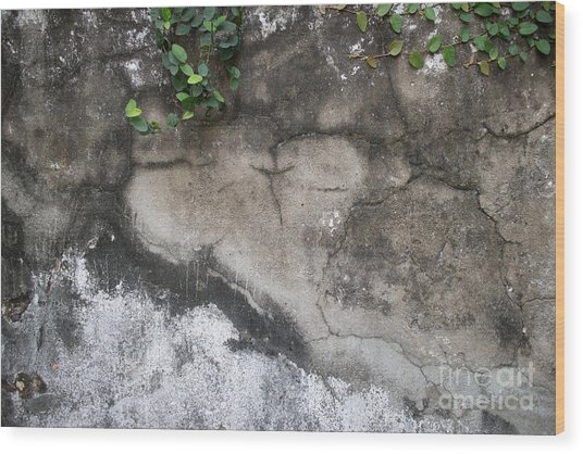Weathered Broken Concrete Wall With Vines Wood Print