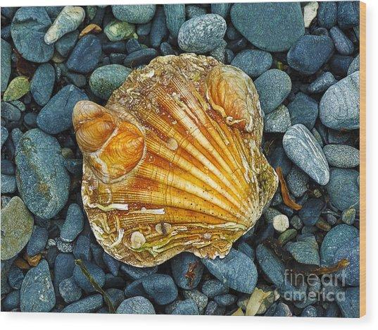 Weathered Scallop Shell Wood Print