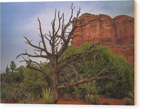 Weathered Tree At Courthouse Butte Wood Print