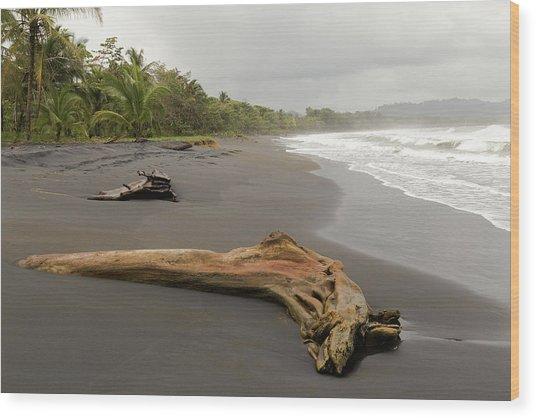 Weathered Tree On Costa Rica Beach Wood Print