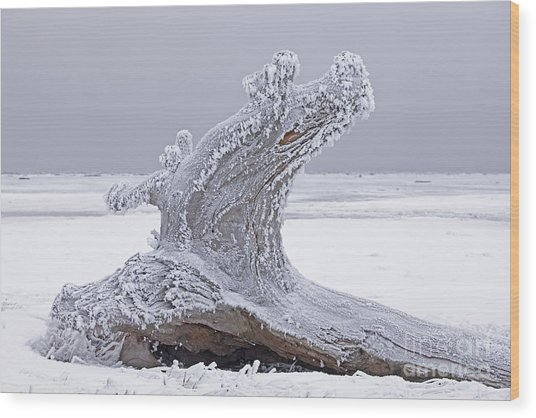 Weathered Tree Trunk In Winter Wood Print by Tim Grams