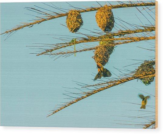 Weaver Birds Wood Print