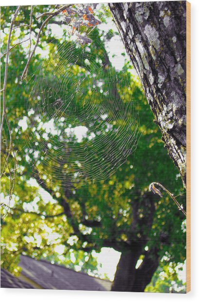 Web Wood Print by Kate Collins
