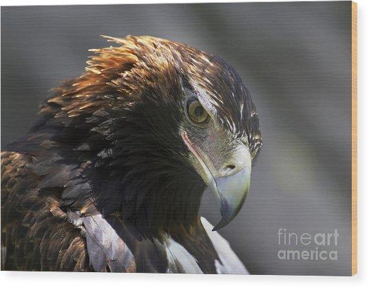 Wedge Tail Eagle Wood Print