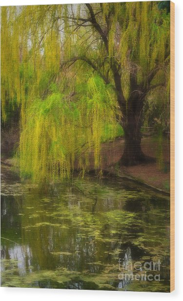 Weeping Pond Wood Print