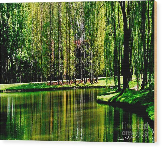Weeping Willow Tree Reflective Moments Wood Print